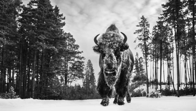 David Yarrow, 'Forest Gump', 2019, Photography, Archival Pigment Print, Hilton Asmus