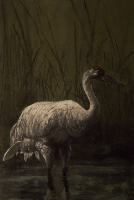 , 'North American Whooping Crane ,' 2016, New York Academy of Art
