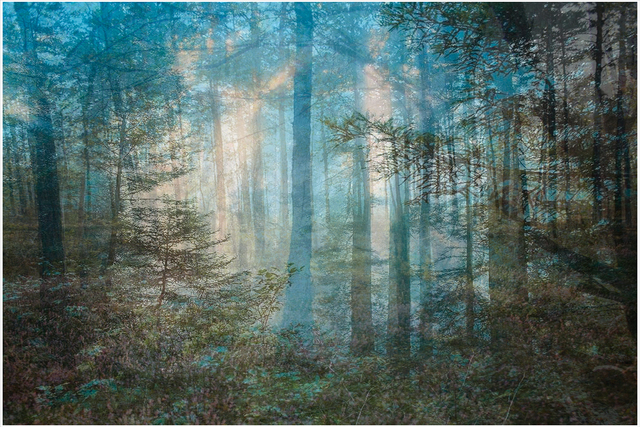 , 'Four Years out of a Death Row Sentence (Forest),' 2009-2016, Mark Moore Fine Art