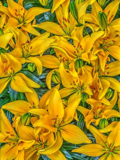 , 'Yellow Lilies,' 2017, Cerulean Arts
