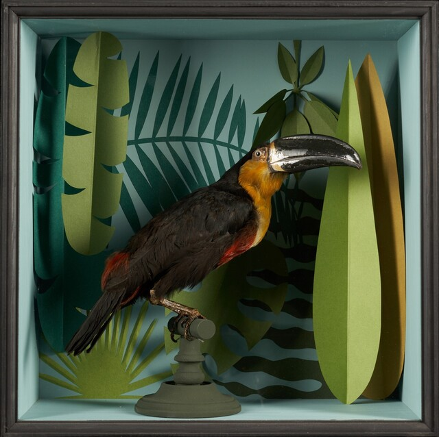 Unknown Artist, 'Vintage Toucans Taxidermy Selection in Designer Display Cases.', before 1947, Design/Decorative Art, Organic materials, Spectandum