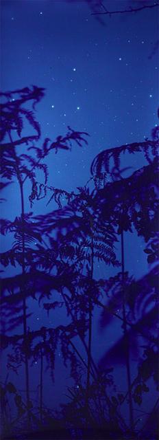 , 'Star Field Bracken,' 2003, Rubber Factory