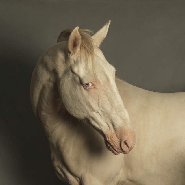 , 'Horse with Blue Eyes,' 2013, SmithDavidson Gallery