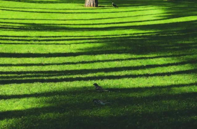 Abbas Kiarostami, 'Trees & Crows 46', 2007, Meem Gallery