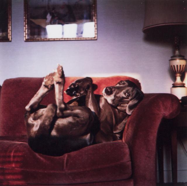 William Wegman, 'On Mrs. Wegman's Couch (From Many Ray:  A Portfolio of 10 Photographs)', 1982, Heather James Fine Art