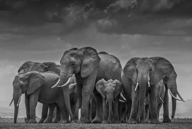 , 'The Circle of Life II, Amboseli, Kenya,' 2015, Holden Luntz Gallery