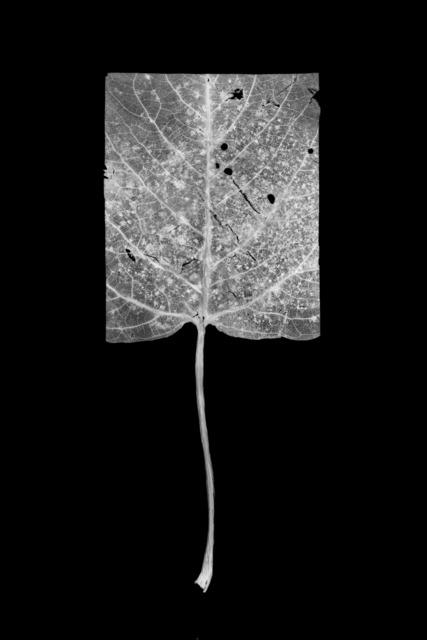 , 'Leaf-cut 05,' , Grundemark Nilsson Gallery