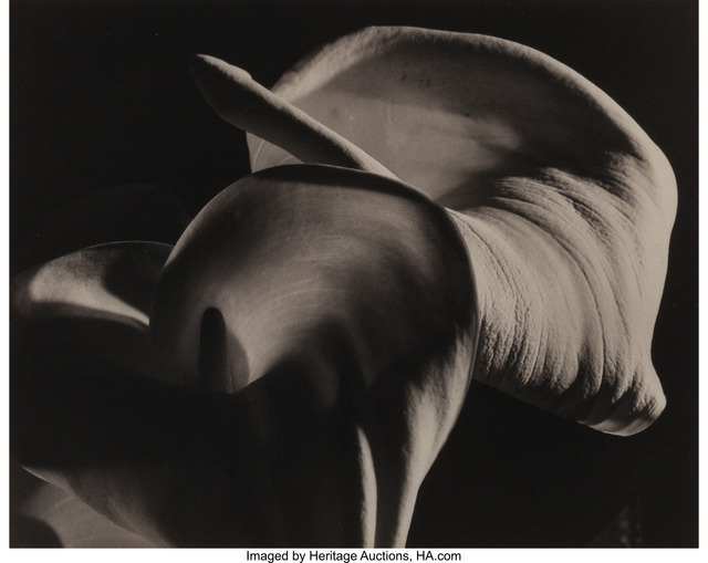 Horst P. Horst, 'Calla Lily/Phallic (Calla Aethiopica)', 1945, Heritage Auctions