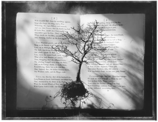 , 'Tree Book,' 1995, Panopticon Gallery