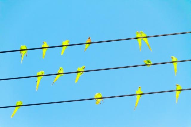 , 'Tokyo Parrots 012,' 2013, IBASHO