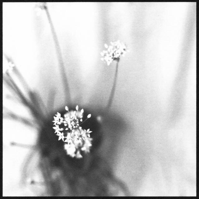 Denise Oehl, 'Garlic', 2018, John Davis Gallery