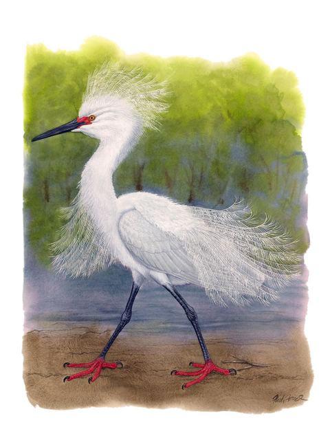 Flick Ford, 'Snowy Egret in Breeding Plumage', 2018, Quidley & Company