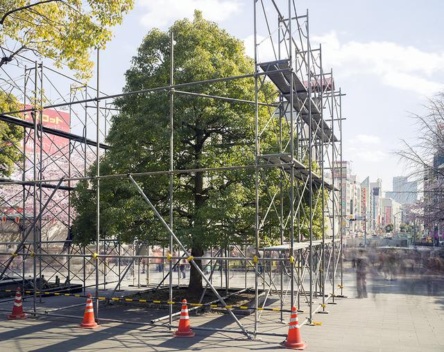 , 'First Hanami, Ueno Park, Tokyo (TV14599),' 2014, Benrubi Gallery