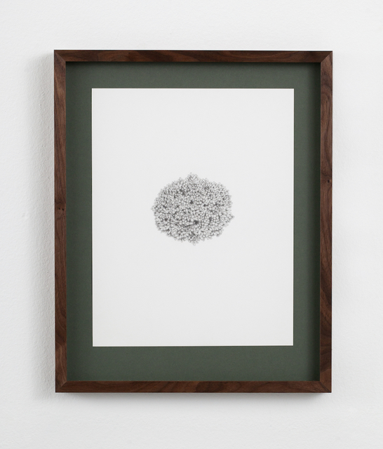 , 'Picea abies 'Mariae-Orffae',' 2016, Kunsthall Stavanger
