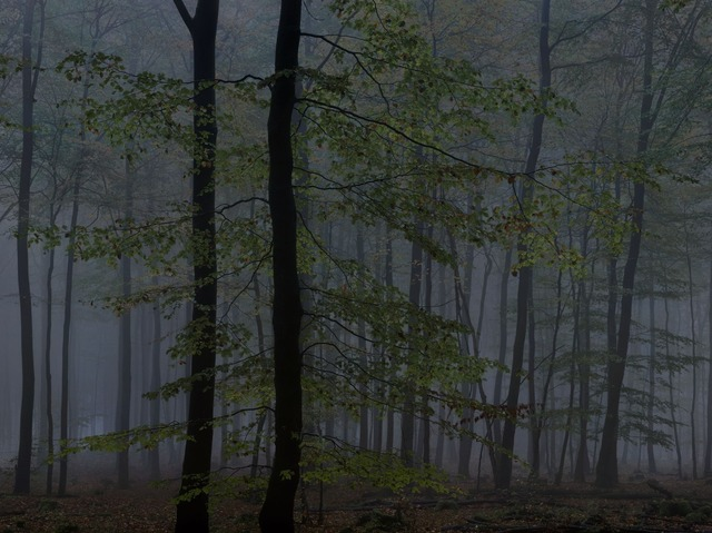 , 'WALD | Landscapes of Memory#2504,' 2010, photo-eye Gallery