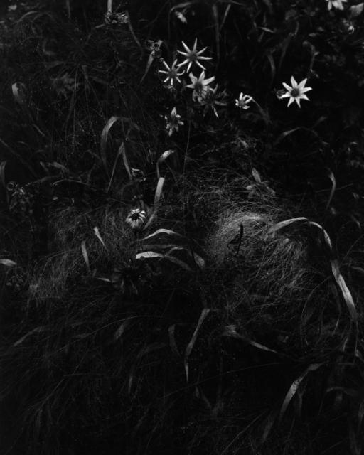 , 'Gartenstück Nr. 5, Freising,' 2017, Galerie Jordanow