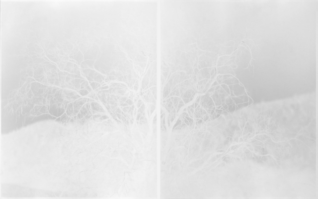 , 'Desert Willow, Tierra Blanca Mountains,' 2015, EUQINOM projects