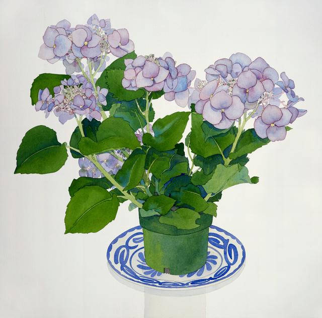 , 'Lavender Hydrangea,' 1994, Andra Norris Gallery