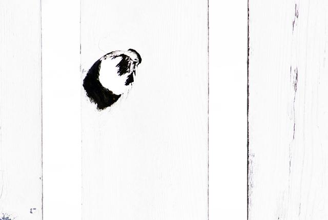 , 'Knothole #1,' 2007, Untitled 2.0