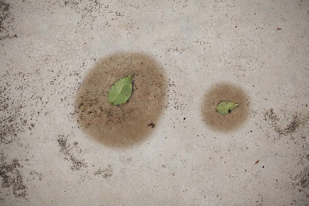 untitled from the series Úmido (Moist)