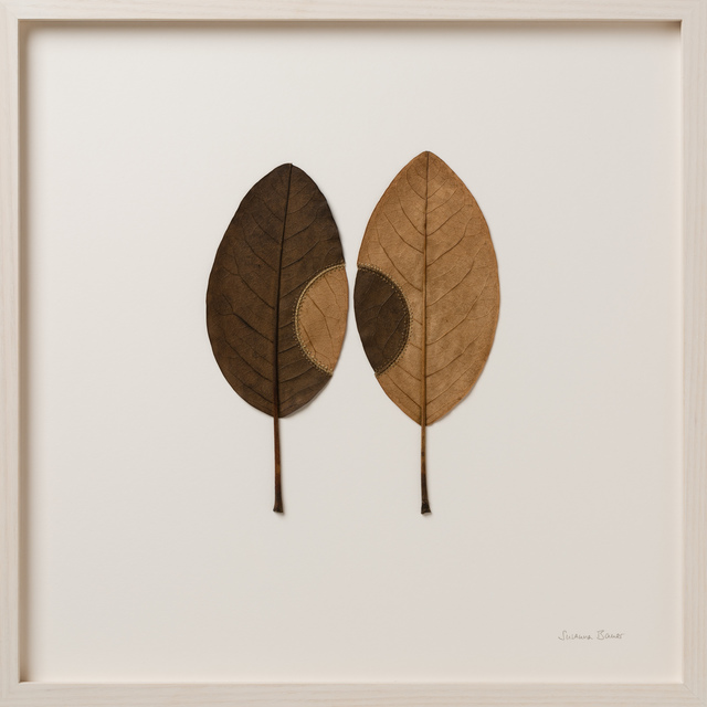 Susanna Bauer, 'Transplant 25', 2018, Muriel Guépin Gallery