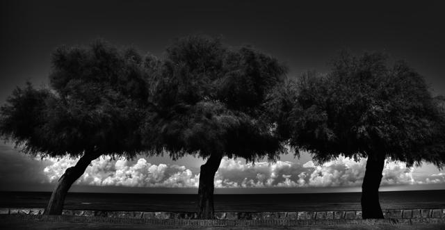 , 'Urbis & Natura _ Tre Alberi Sicilia,' 2014, Spaziofarini6