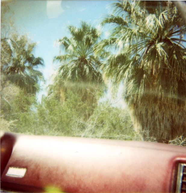 Stefanie Schneider, 'Dashboard Palm Trees (Sidewinder) ', 2005, Photography, Digital C-Print, based on an expired Polaroid, not mounted, Instantdreams