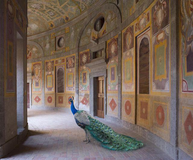 Karen Knorr, 'Heaven's Vault, Villa Farnese, Caprarola', 2014, Photography, Color pigment print on Hahnemühle Fine Art Pearl Paper, Sundaram Tagore Gallery