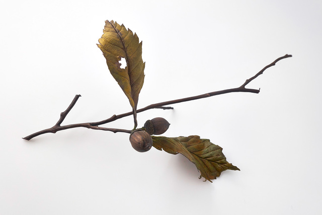 , 'Konara oak with acorns,' 2017, Ippodo Gallery