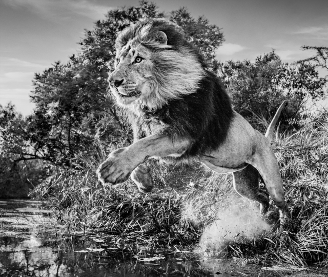 David Yarrow, 'First Down, South Africa', 2020, Photography, Archival Pigment Photograph, Holden Luntz Gallery