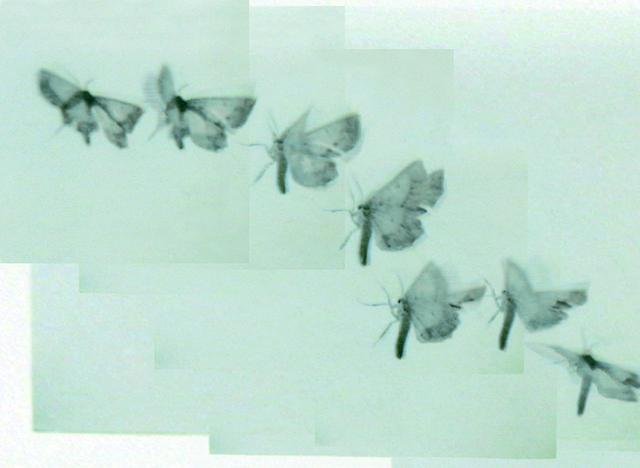 , 'ATL Film Still 2,' 1996-2008, HackelBury Fine Art