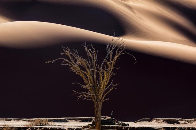 , 'Tree of life I,' 2014, OdA