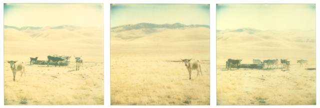 Stefanie Schneider, 'Untitled, triptych', 2019, Photography, Analog C-Prints based on 3 expired Polaroids., Instantdreams