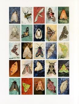 , 'Mariposas Nocturnas, Index No. 47, Departmento de Santa Cruz, Bolivia,' 2012, Pace/MacGill Gallery