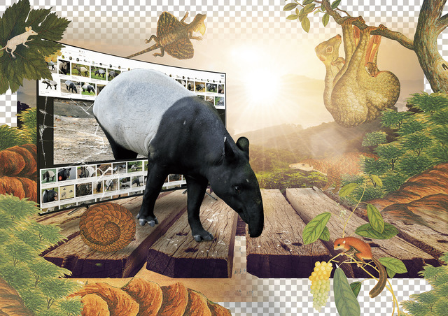 , 'The Adult Malayan Tapir is Surrounded by Mountains,' 2019, Liang Gallery