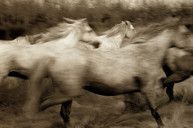 , 'Running Horses, France, Edition of 25,' 1989, Cavalier Galleries