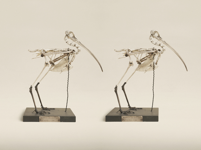 , 'Eurasian Curlew,' 2014, KLOMPCHING GALLERY