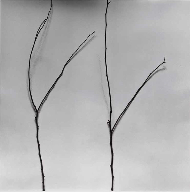 , 'Whispers of Trees-Cercis,' 2011-2017, Alisan Fine Arts