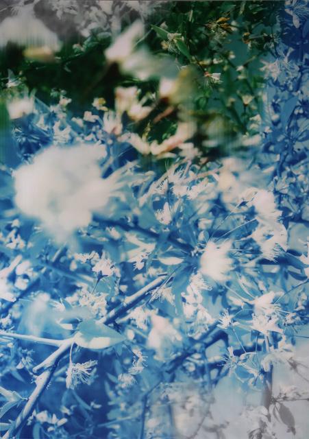 , 'Flowers,' 2015, M97 Gallery