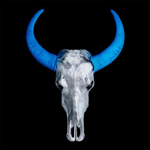 , 'Chinese Water Buffalo Skull – Silver Skull with Light Blue Horns on Black – Small,' 2018, M1 Fine Art
