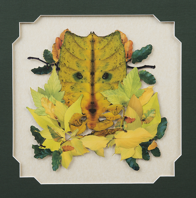 , 'Yellow and Green, or Leaf Bug,' , InLiquid