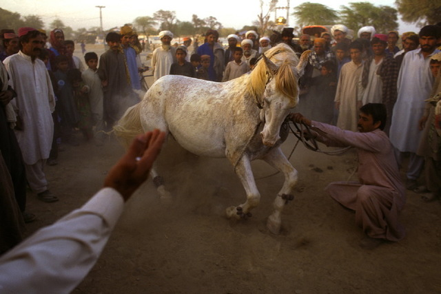 , 'Horse Dancing in Multon, Pakistan. The compound of Malik Fazal Abbas Mahay, one of the most powerful and respected feudal lords in Multan,' 2009, Anastasia Photo