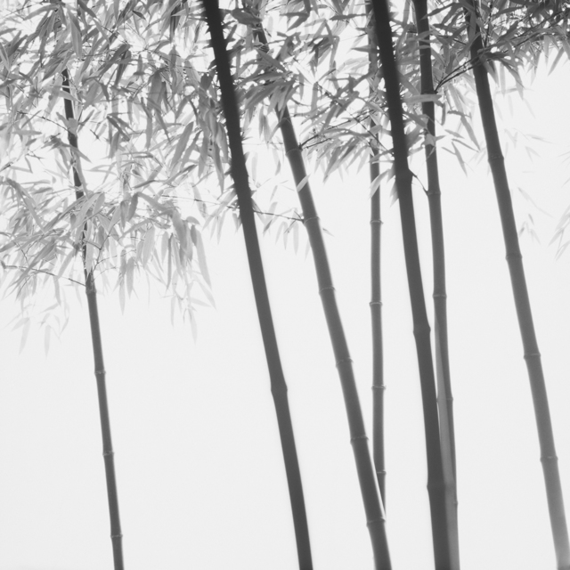 , 'Bamboo series,' , Gallery Lux