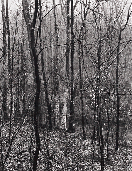 , 'Redding Woods #1, Redding, CT,' 1968, Pucker Gallery