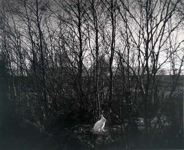 Pentti Sammallahti, 'Signilskar, Finland (Rabbit in Woods)', 1974, ClampArt
