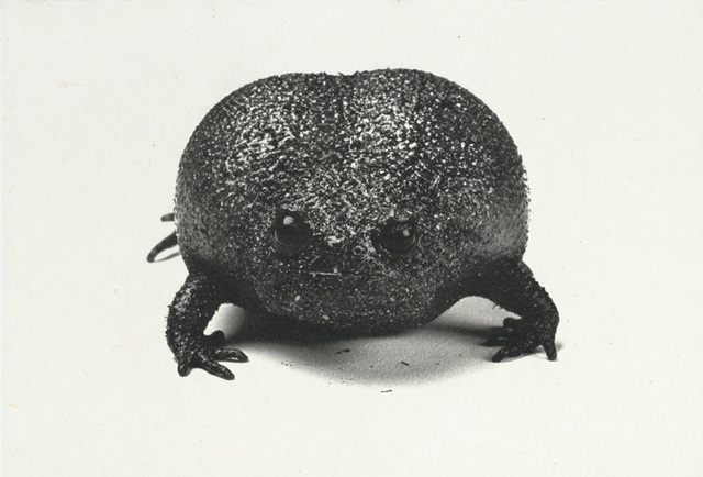, 'Plain Rain Frog,' 2008, Crown Point Press
