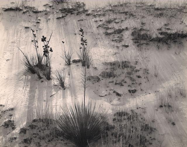 Brett Weston, 'Yucca and Scrub, White Sands', 1946, Weston Gallery