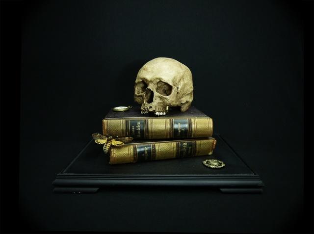 , 'Memento mori with Deaths-head Hawkmoth,' 2015, Nanda Hobbs Contemporary