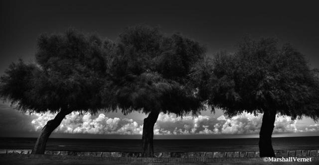 , 'Tre Alberi,' 2014, Photo12 Galerie