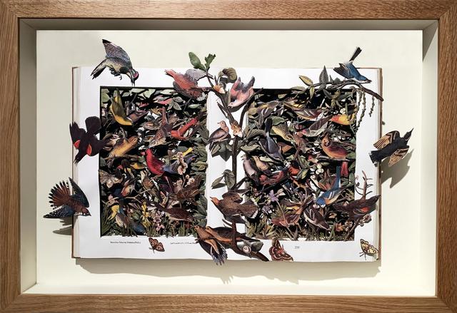 Kerry Miller, 'AUDUBON'S BIRDS OF NORTH AMERICA', 2019, Heller Gallery